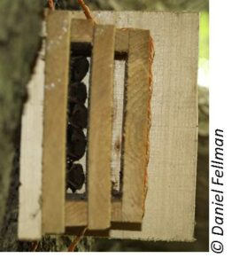Cajas nido para murciélagos