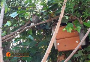 Caja nido con retales de friso
